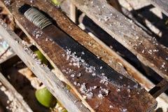 Cleaning unwind fish wood Riviera Maya Royalty Free Stock Photos