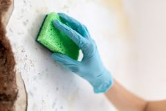 Cleaning up dangerous fungus from a wet wall after water pipe leak. At home Royalty Free Stock Photography