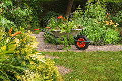 Cleaning up garden in summer. Wheelbarrow with garden-waste in blooming summergarden Stock Photos