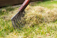Cleaning up the grass with a rake. Aerating and scarifying the lawn in the garden Royalty Free Stock Image