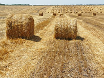 Cleaning up of wheat. Harvesting on the wheat field Royalty Free Stock Images