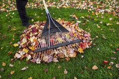 Cleaning up Yard during Autumn Royalty Free Stock Image