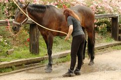 Cleanness is mortgage of health. A woman washes the feet of horse Stock Photography