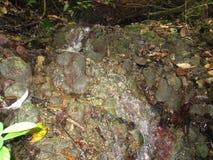 Clear斯普林斯流程在热带森林里 图库摄影