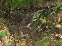 Clear斯普林斯流程在热带森林里 库存图片