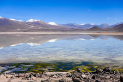 Clear altiplano laguna in sud Lipez reserva, Bolivia Stock Photos