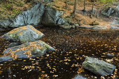 Clear amber pool with floating leaves, at Enders State Park, Con Royalty Free Stock Photography