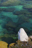 Clear Aqua Tahoe Waters Royalty Free Stock Photos