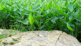 Clear background of clear stone and plant combinations stock photos