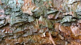 Clear bark texture background illustration royalty free stock photography