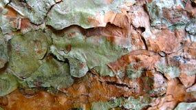 Clear bark texture background illustration stock photos