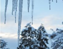 Winter Icicles Before Daybreak with Snow Covered Pine Trees in Background stock photos