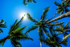 Clear blue sky above the palm branches of the palm trees at the Ko Olina resort area on the tropical island of Oahu Stock Photos