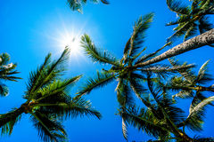 Clear blue sky above the palm branches of the palm trees at the Ko Olina resort area on the tropical island of Oahu Royalty Free Stock Photography