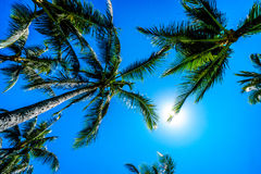 Clear blue sky above the palm branches of the palm trees at the Ko Olina resort area on the tropical island of Oahu Royalty Free Stock Images