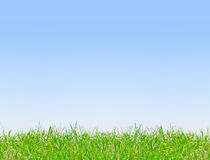 Clear blue sky background. With green grass Royalty Free Stock Photo