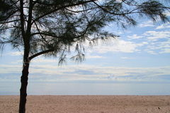 Clear Blue sky, Blue sea, beach, cloud, a pine tree Royalty Free Stock Photo
