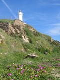 Extremity of a white lighthouse on a headland in the spring in Italy. Clear blue sky with clouds. Sunny day. Travel destination. Purple flowers in foreground Stock Photography