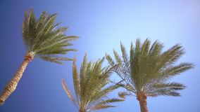 Clear blue sky and the leaves in the wind from the palm trees stock video footage