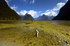 Clear blue sky at Milford Sound Royalty Free Stock Images