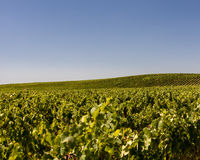 Clear blue sky over a Napa Valley vineyard hills Royalty Free Stock Photos