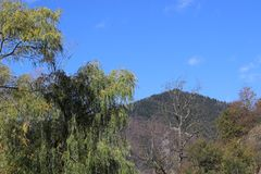 Clear blue sky and trees on high hills stock photo