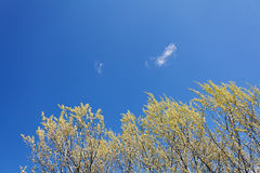 Clear blue sky Royalty Free Stock Image