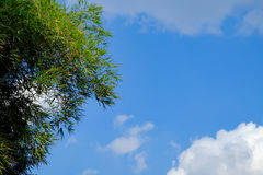 Clear  blue sky white cloud and green leaf tree day time for background backdrop use Stock Images