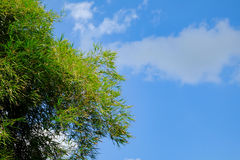 Clear  blue sky white cloud and green leaf tree day time for background backdrop use Royalty Free Stock Image