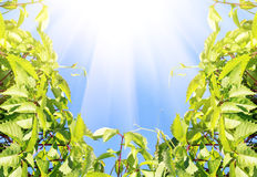 Clear Blue Sky With Green Plant Stock Image