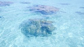 Coral rocks through transparent aquamarine water. Clear blue transparent water of a lagoon with some coral rocks visible on the seabed royalty free stock photography