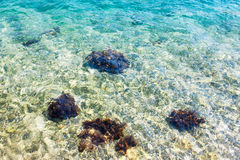 Clear blue transparent water with mussels on the rocks. Stock Image