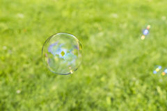 Clear bubbles on grass background Royalty Free Stock Images