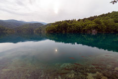 Clear clean lake with fish. Royalty Free Stock Photos