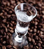 Clear coffee liquor in a tall glass Royalty Free Stock Photo