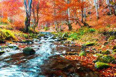 Clear creek in autumn forest stock photography