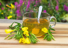 Clear cup of herbal tea from evening primrose. Stock Image