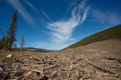 Clear cut forest. Clear cut logging area in open forest Royalty Free Stock Photo