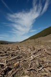 Clear cut forest. Clear cut logging area in open forest Stock Images