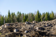 Clear cut forest area Royalty Free Stock Photo