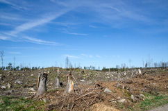 Clear cut forest Royalty Free Stock Photo