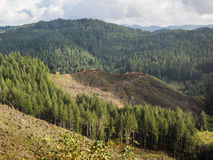 Clear cut logging Stock Photography