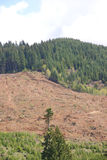 Clear cut logging slope, Royalty Free Stock Photo