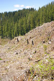 Clear cut logging slope Royalty Free Stock Images