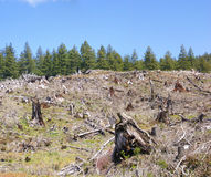 Clear cut logging slope royalty free stock photos