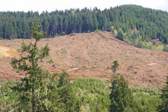 Clear cut logging slope Stock Image