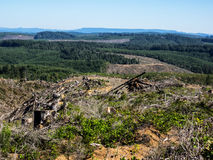 Clear cut logging. Various stages of clear cut logging over hills of tree farm in Oregon Royalty Free Stock Photos