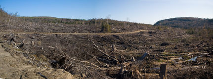 Clear Cutting. A completely devastated swath of boreal forest one year after a tornado followed by clearcutting stock photos