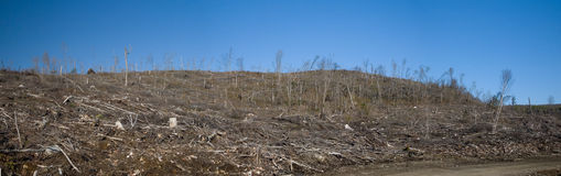 Clear Cutting. A hill side with the devastated results of forest clear cutting stock images