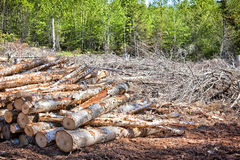 Clear Cutting Royalty Free Stock Photos